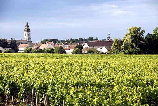 Maison Louis Bonnard Wijnhandel Smit