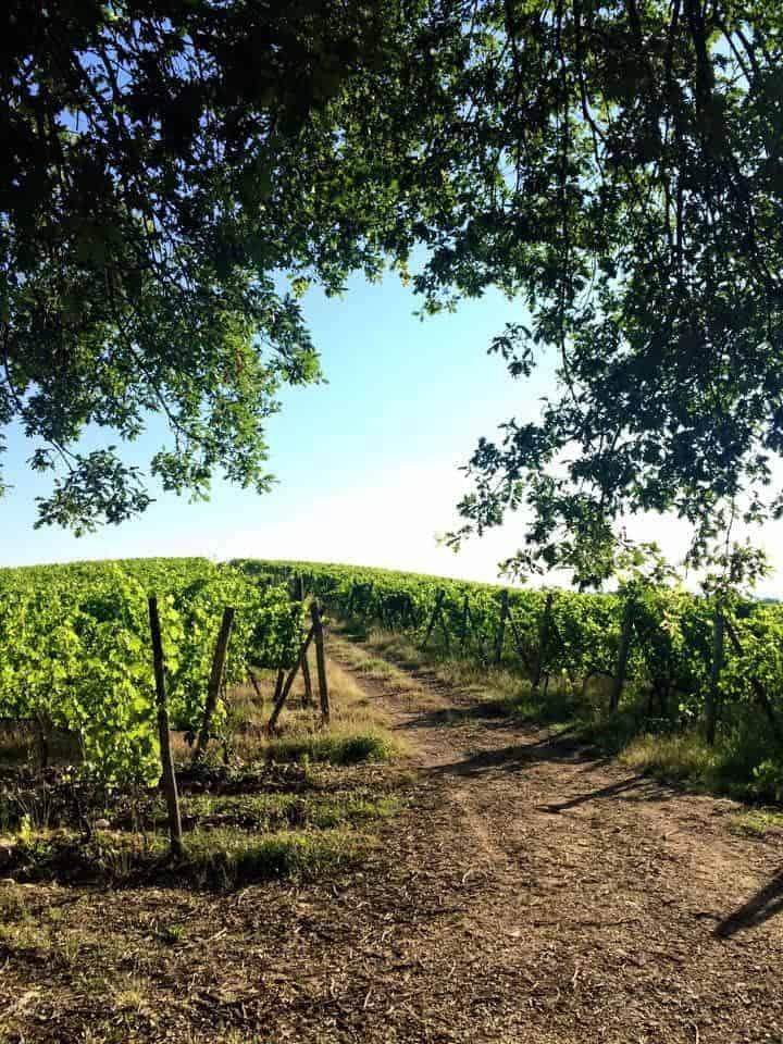 Tenuta Orsumella wijngaard Wijnhandel Smit